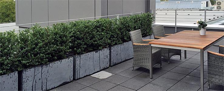 ersatz f r buchsbaum eine alternative zum buchsbaum w hlen ideen pflegetipps buchsbaum ersatz. Black Bedroom Furniture Sets. Home Design Ideas